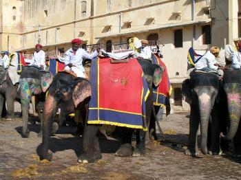 Elephant Ride  at Amer Fort - Jaipur