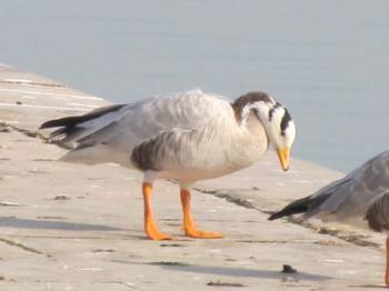 Bird Watching Activities in Uttarakhand 1