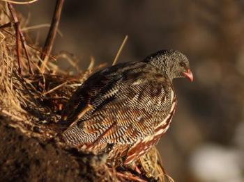 Bird Watching Activities in Uttarakhand 2