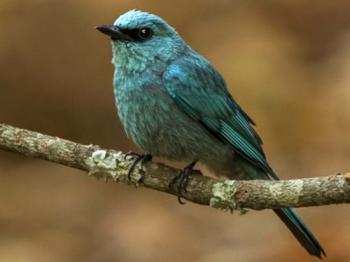 Bird Watching Activities in Uttarakhand 3