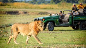 Game Drive in South Luangwa