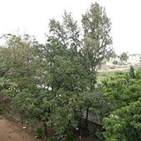 Image-23