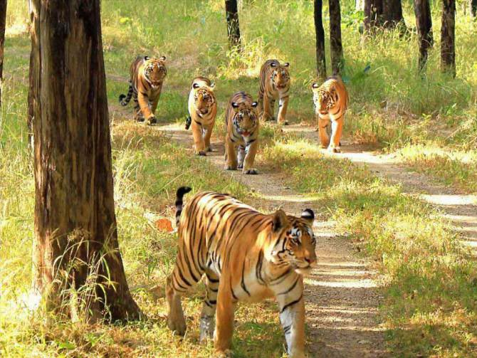 Nature & Tiger Country Tour