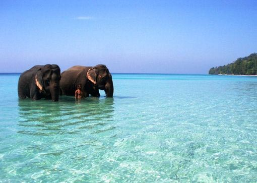 Alluring Andaman Package