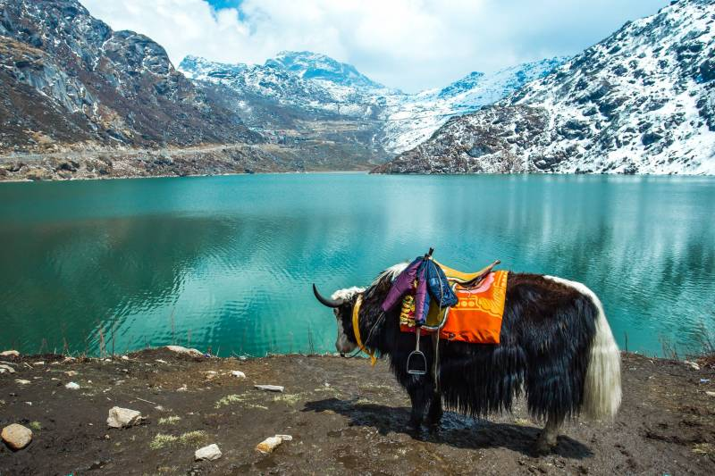 Gangtok & Darjeeling Luxury Tour Package