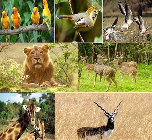 Gujarat Wildlife Tour - I