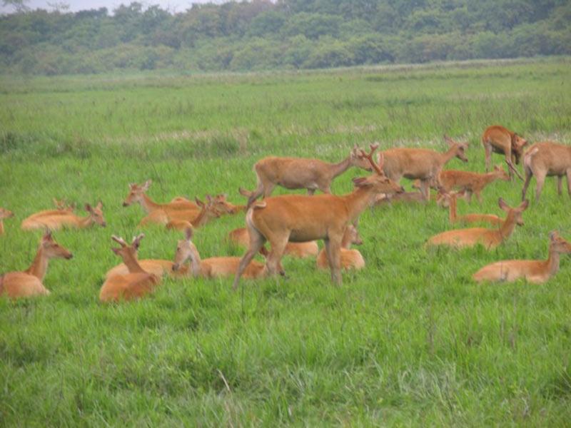 Wildlife Circuit Tour