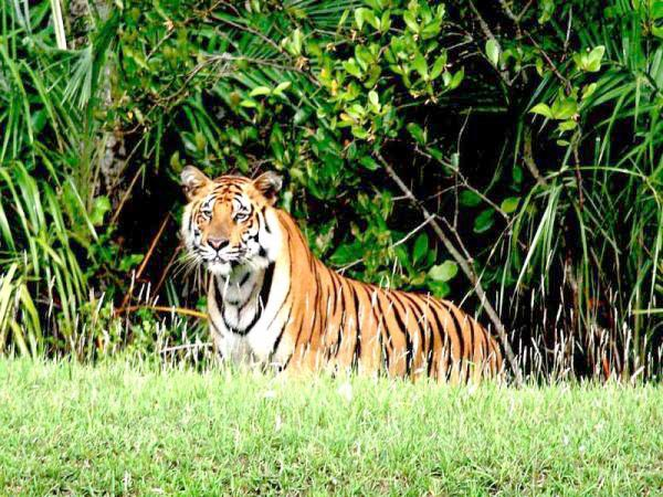 Central India Tigers Trails Tour