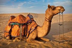 Desert Pageantry Tour