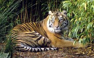 Wildlife Tiger Tour