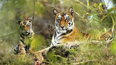 Tour For Nainital Corbett 3Nights/4Days