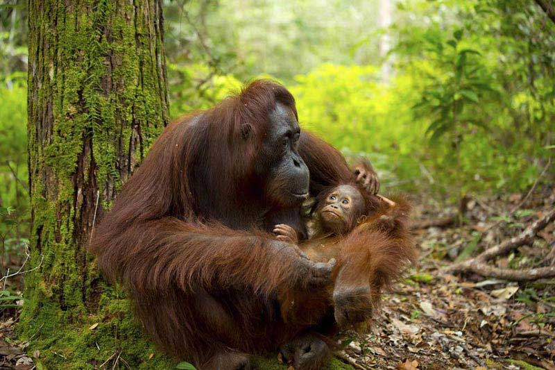 Handpicked Borneo 10N/11D Package