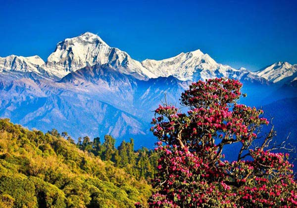 Taste Of Nepal 5N/6D Package