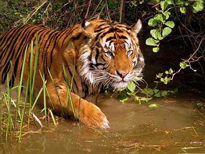 Kolkata Culture With Wild Safari 5N/6D Package