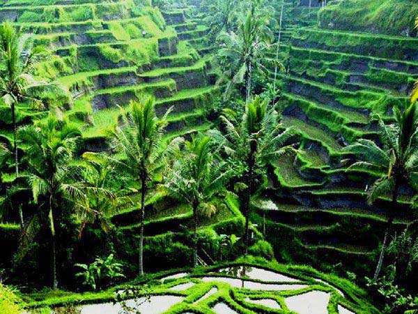 Bali Highlights Tour 3N/4D