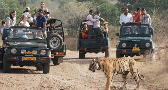 04 Nights 05 Days Jaipur Ranthambore Tour