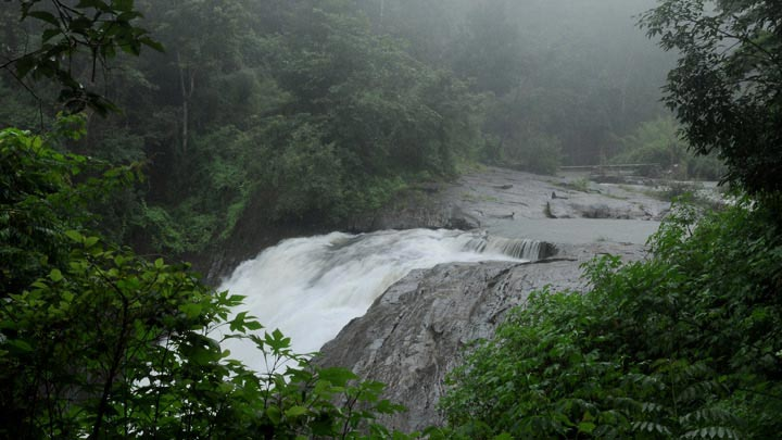 Short Tour of Wayanad Tour