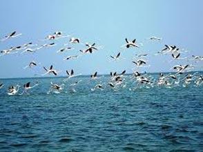 BirdingRajisthan Tours