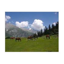 Kashmir Tour - 6 Nights / 7 Days Tour