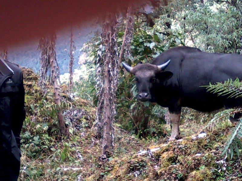 8 Night 9 Days - Arunachal Tour