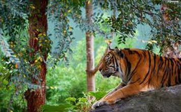 Rishikesh And Rajaji National Park Tour