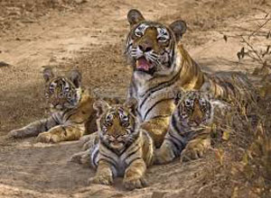Rajasthan Wildlife Tour