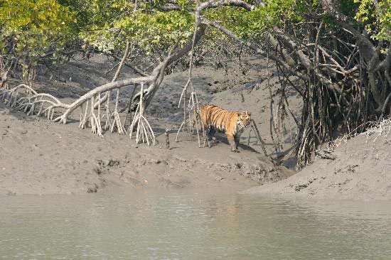 Sunderban Tour from Kolkata 2 day