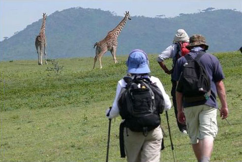 7 Days Walking Safaris In Kenya Tour