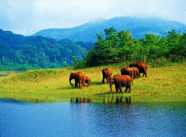 Charming Kerala 6 Nights 7 Days Tour