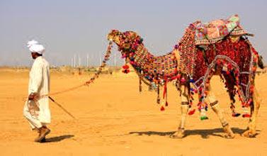 Camel Safari Tour
