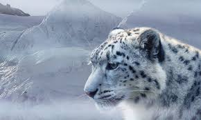 Snow Leopard Trail Spiti Tour