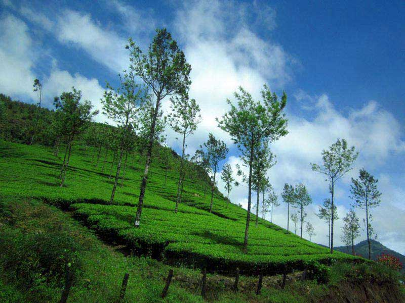 Athirapally - Munnar - Thekkady - Alleppey Tour
