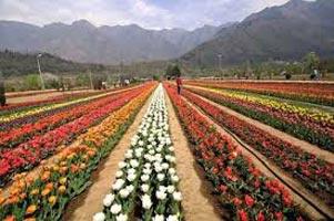 Jammu Delight With Srinagar Tour