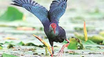 Punjab Nature and Eco Tour Package