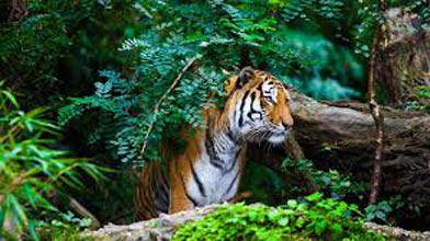 Wildlife Tour Package : : 02Nights/03 Days