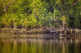 Sundarbans Short Tour