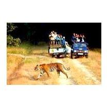 Den Of Tiger Tour