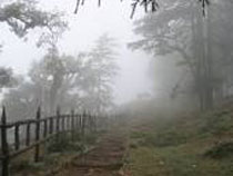 Mussoorie & Dhanaulti Tour
