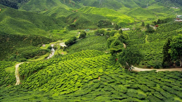 Darjeeling Gangtok Tour Packages