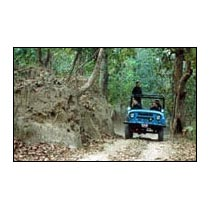 Jungle Tour / Safari Himalayan Dooars -1