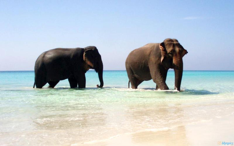 Exotic Andaman Group Vacation Tour