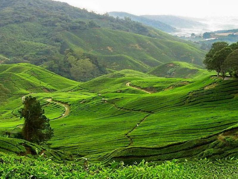 Kerala Pocket Friendly Tour Package