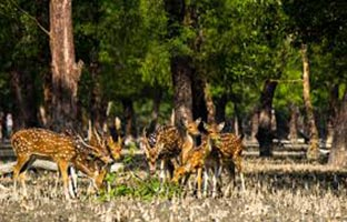 World largest Mangrove forest Tour (Sundarban)