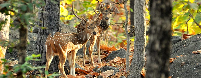Sundarban Forest safari with Kolkata city Tour