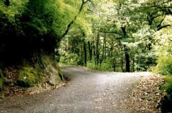 Lake District - Nainital with Ranikhet TOur
