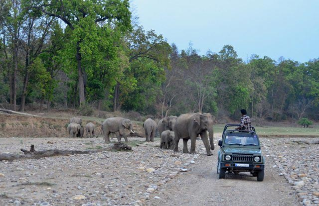 Rajaji Tiger Reserve Tour