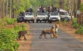 Tadoba Tiger Watching Break Tour
