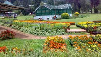 Fantastic Munnar Honeymoon Package 3 Nights 4 Days
