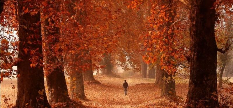 Kashmir Autumn Carnival Tour