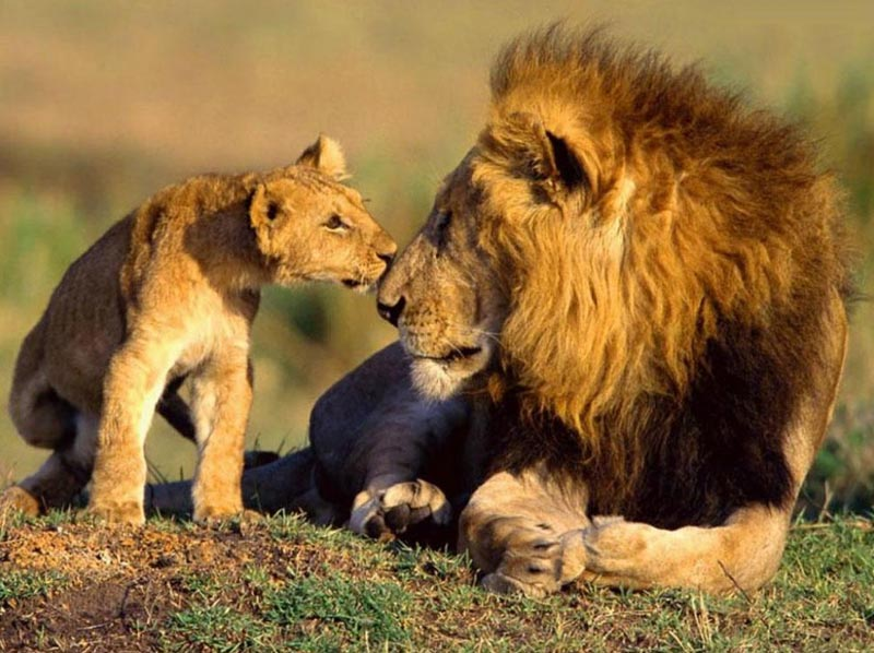 Ahmedabad-Sasan Girhertiage And Wildlife Tour